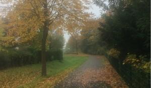 Trübes Herbstwetter am Morgen